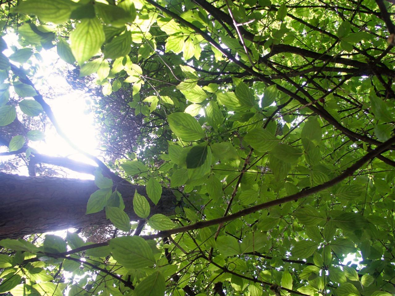 De botanische tuin in Zagreb - De zon door de bomen