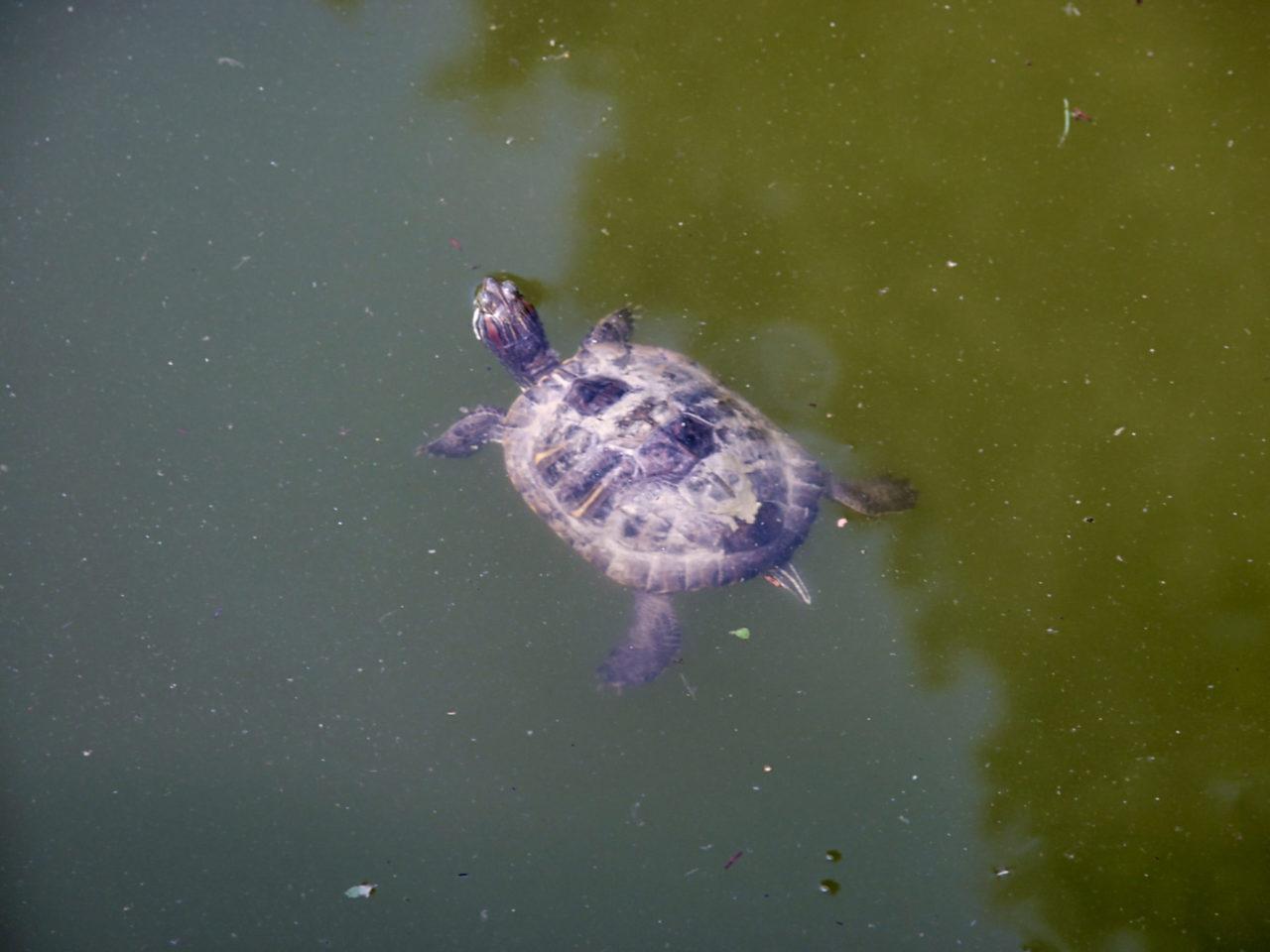 De botanische tuin in Zagreb - Schildpad ligt te genieten in de zon