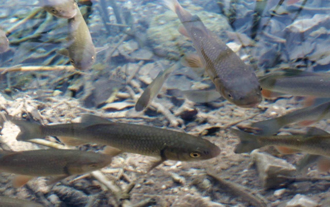 Overal waar je kijkt zie je vissen